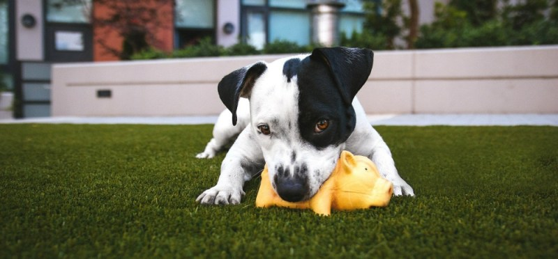 why dogs need toys chew