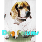 dogforum