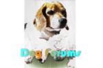dogforumpre