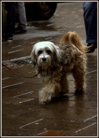 dogmarket