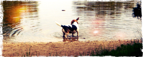 protect your dog from lake algae