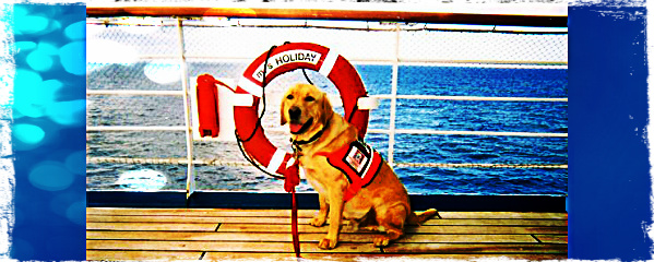 can you take your dog on a cruise