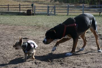 dog friendly colorado park