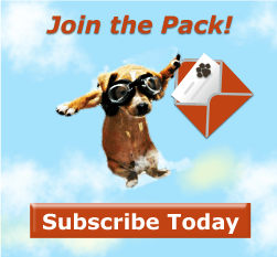 subscribe to Wag The Dog UK