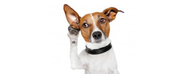top 100 pet blogs