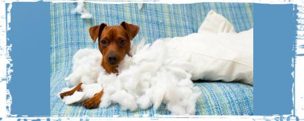 avoid puppy stress