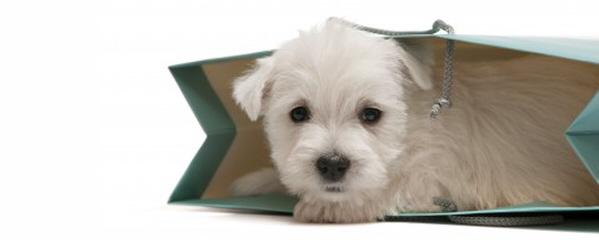 online shop dog