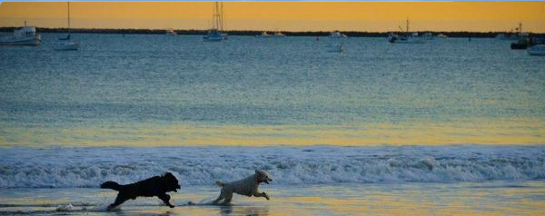 San Luis Obispo County's Gone to the Dogs-Dog Friendly California