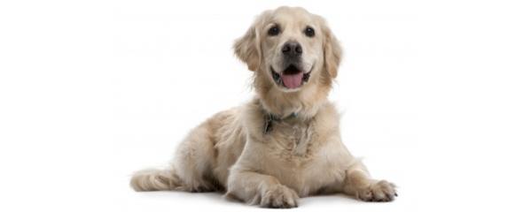 dogs living longer