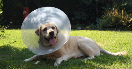 tips on getting pet insurance