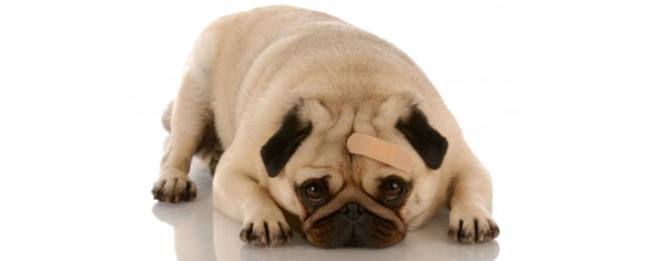5 Common Dog Health Problems And How To Deal With Them