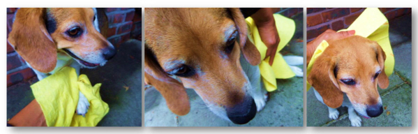 absorbant towels for dogs