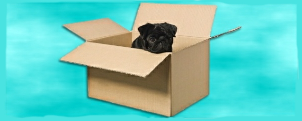 house move with animals