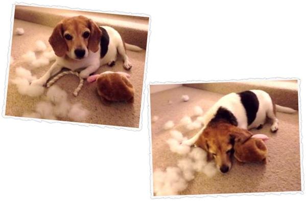 dog toy tester