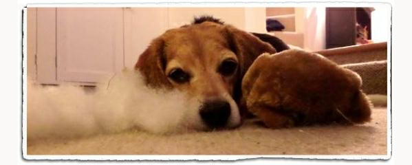 Dog toy chew badit
