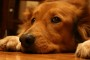 dogs with arthritis tips