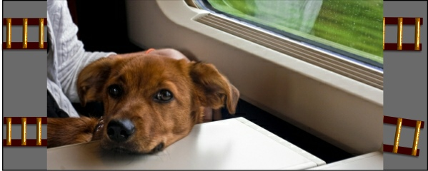 travelling with your dog via train