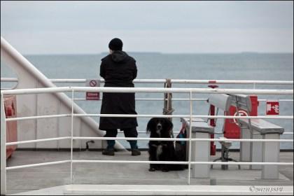 dog via ferry