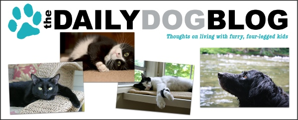 The daily dog blog