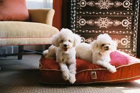 dog friendly hotel dogs