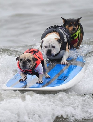 beach dogs safety tips