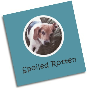 Customizable Pet Photo of Maggie