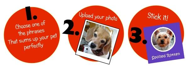 pookapet steps for photo sticker