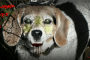 halloween tips for dogs