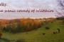 dog walks in wilshire, uk