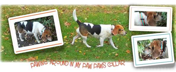 paw paws collar and leads