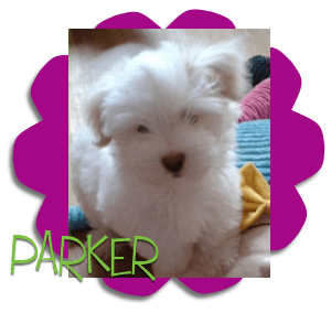 Berry clever dog parker