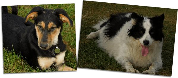winner of skipper's dog treats