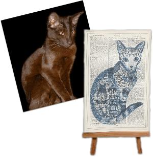 roo abrook cat print