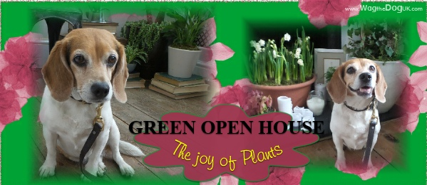 the joy of plants cover