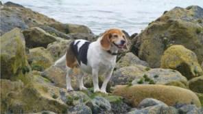 Climbing rocks on St. Ives dog friendly beach