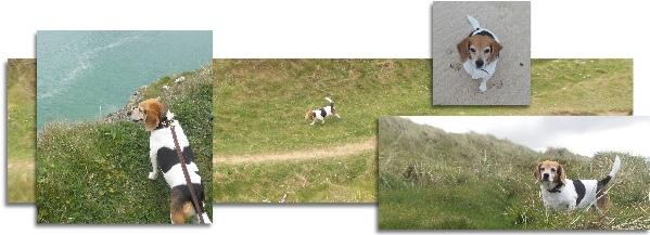 dog friendly walks cornwall