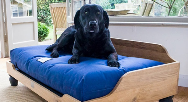 berkely dog on bed