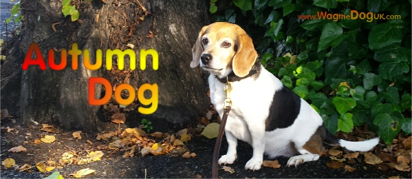 autumn dog cover