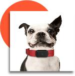 nuzzle dog tracking collar dog