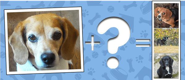 discover dog breeds cover