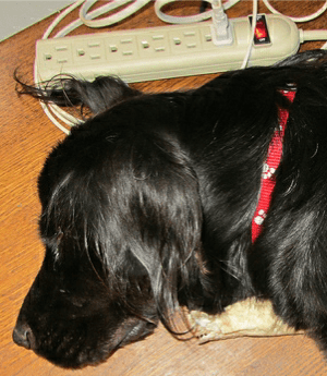 Pet Electrical Safety sleeping