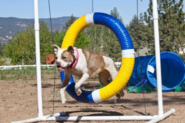 Reward-Based Dog Training fun