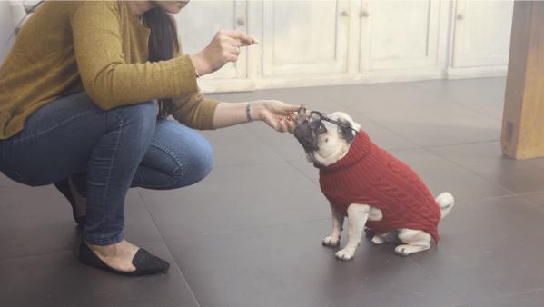 pug christmas video scence
