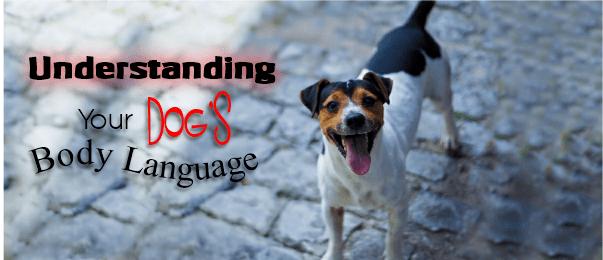 body language dog cover