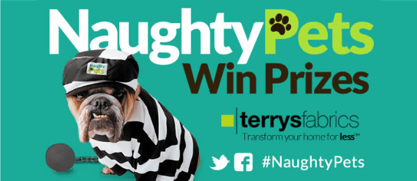 naughty pets contest
