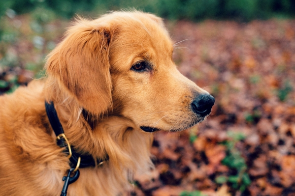 Dog lovers -Friendly Destinations for 2016