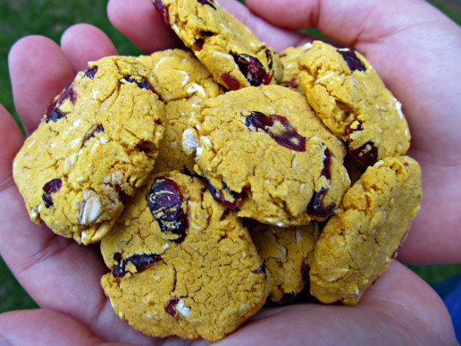 gluten-free-pumpkin-cherry-dog treats
