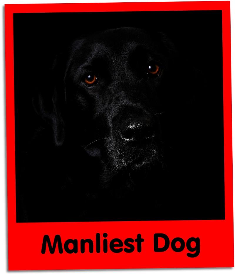 manliest dog grid