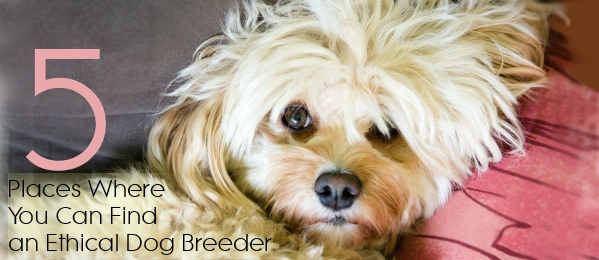 ethical dog breed cover open