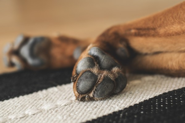 Keep House Clean with Dogs paws